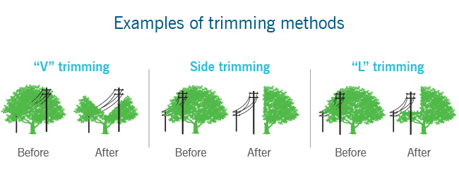 Examples of tree trimming methods