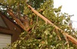 Uprooted tree leaning on the roof of a house