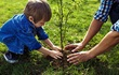 Child planting a small tree