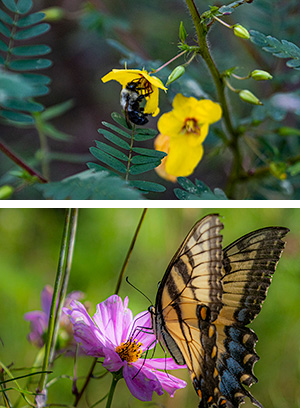 A bee and a butterfly on flowers in a two close-up images.